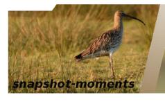 snapshot-moments